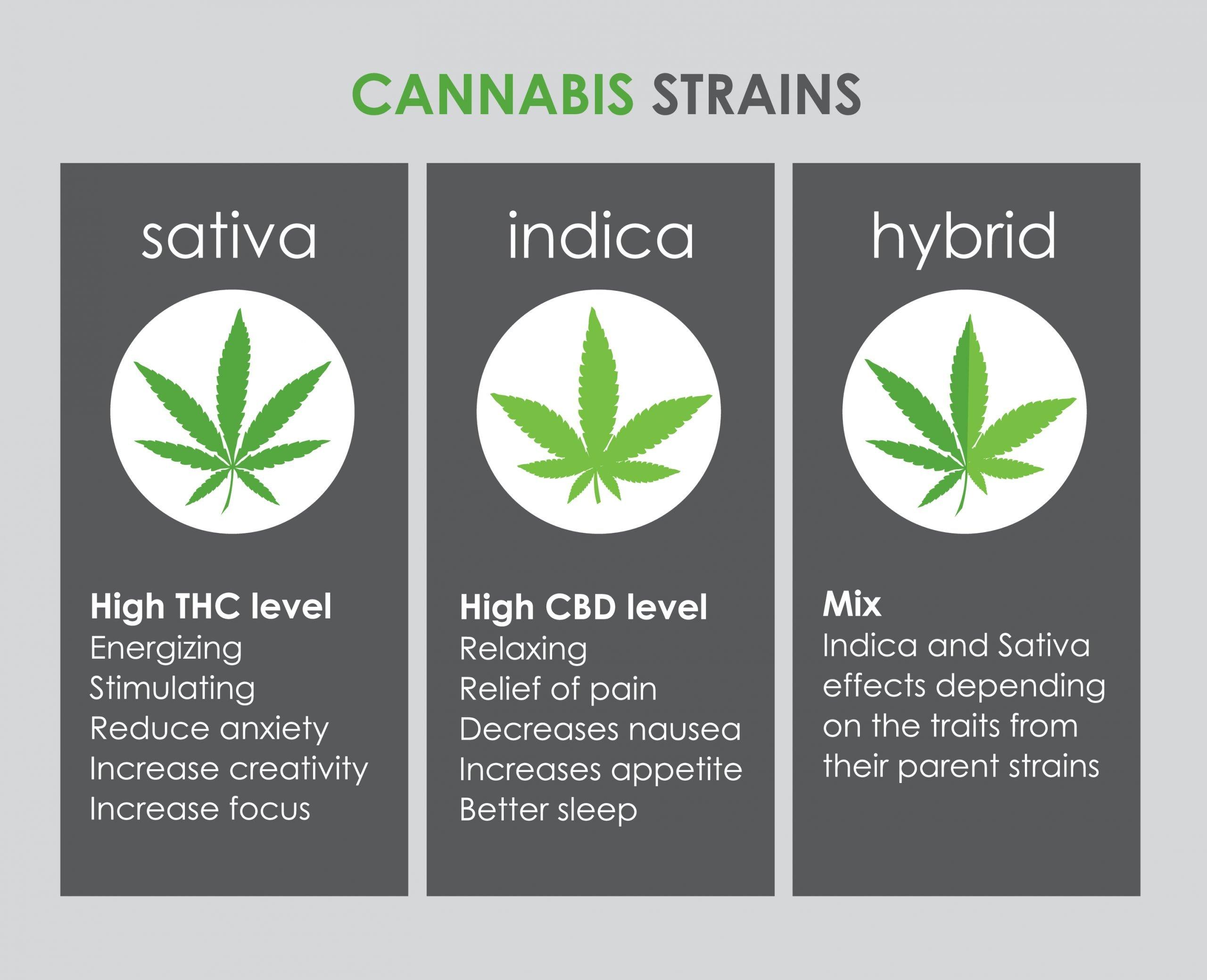 Sativa vs Indica vs Hybrid | Green Sativa